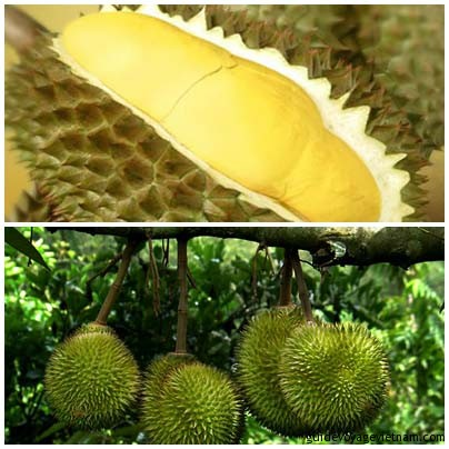 3.durian
